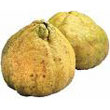 ugli_fruit.jpg
